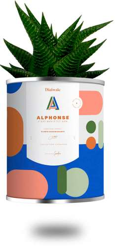 Plantes - Plante assainissante avec pot personnalisé - Alphonse | Diaïwaïe - Pandacola