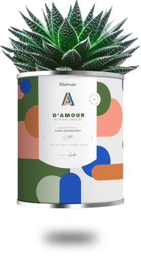 Plantes - Plante dépolluante personnalisé - D'Amour et D'Eau Fraiche   Diaïwaïe - Pandacola