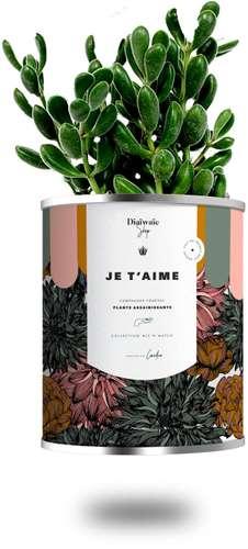Plantes - Plante assainissante avec pot publicitaire - Je T'aime | Diaïwaïe - Pandacola