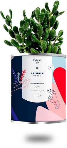 Plantes - Plante dépolluante avec pot publicitaire - La Main Verte | Diaïwaïe - Pandacola