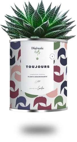 Plantes - Plante Kid assainissante avec pot personnalisé - Toujours   Diaïwaïe - Pandacola