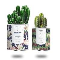 Duo plantes dépolluantes personnalisées - Mummy Girl/Boy | Diaïwaïe - Pandacola