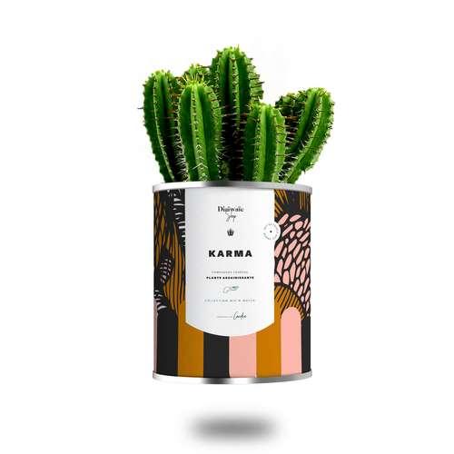 Plantes - Plante assainissante avec pot personnalisable - Karma   Diaïwaïe - Pandacola